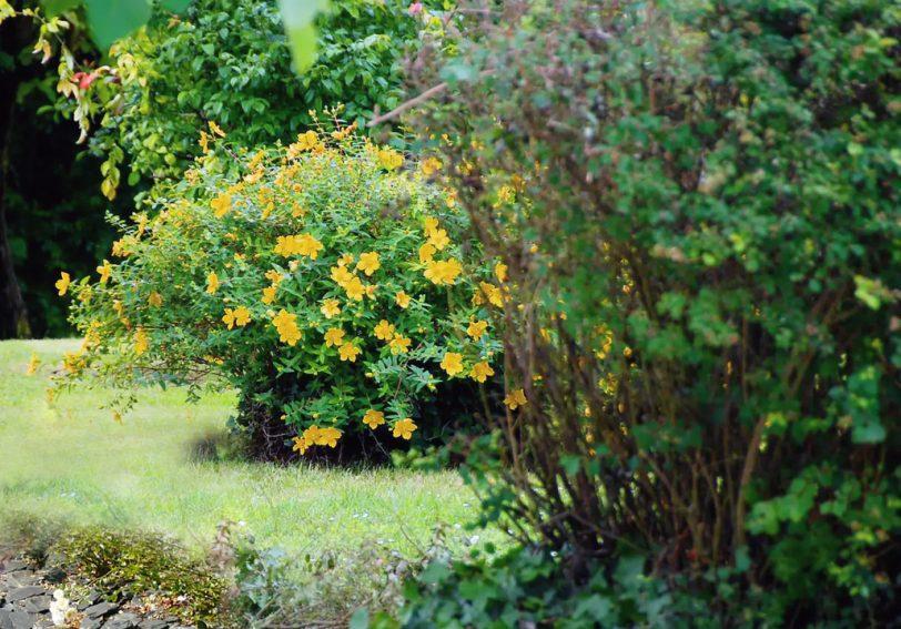aménager son jardin : les arbustes structurent le jardin