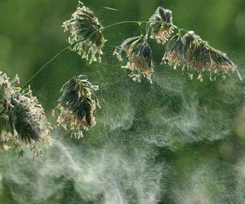La maison doit protéger les habitants des pollens de la nature