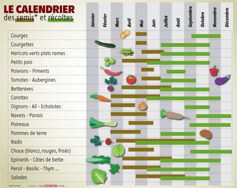 calendrier plantations récoltes potager légumes